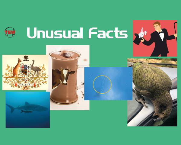 Unusual Facts image